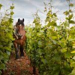 labour-a-cheval-des-terres-du-domaine-michel-magnien-background-background_1440