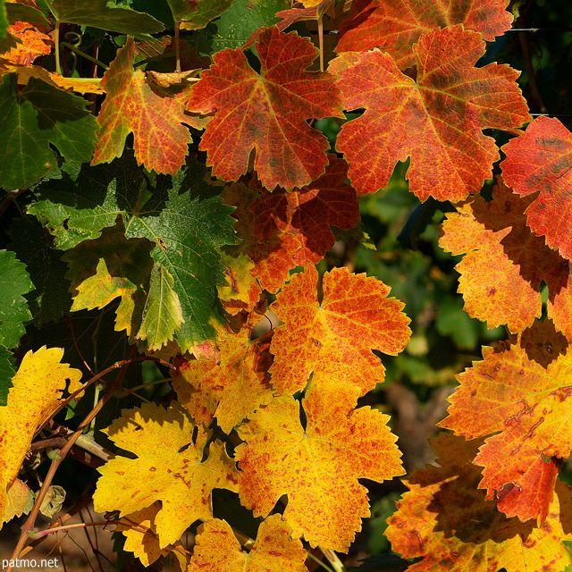 Produits de saison & vins d'automne